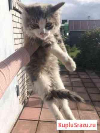 Кошечка в добрые руки Вязьма