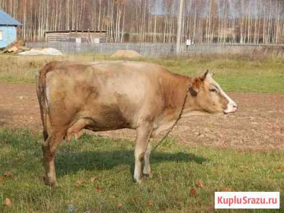 Корова Гагарин