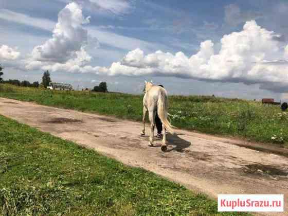 Лошадь Шаталово