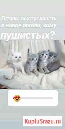 Отдам котят Балаково