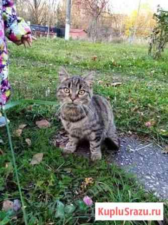 Ищем дом кошке-подростку Рославль
