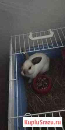 Продаю декаративного кролика Ставрополь
