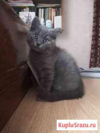 Котенок в добрые руки Тамбов
