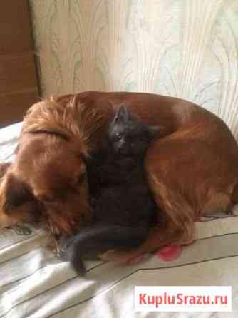 Котёнок в добрые руки Тамбов