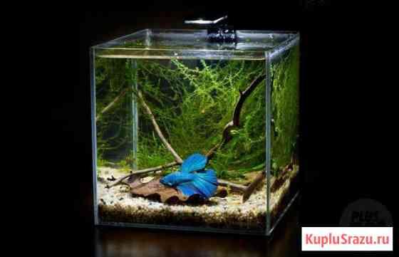 Подарок к празднику (аквариум с петушком) Тамбов