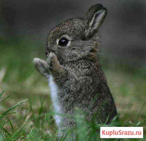 Крольчата. Крольчихи. Мясо кроликов Томск