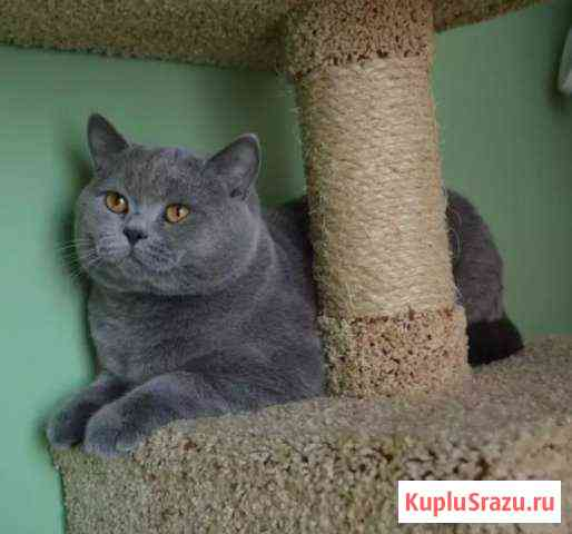 Котик для вязки Ишим