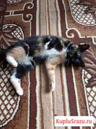 Котята 7 месяцев Вавож