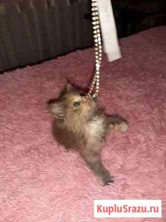 Отдам котенка в надежные руки Абакан