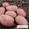 Картофель деревенский оптом и в розницу