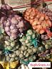 Картошка с о своего огорода сорт луговская