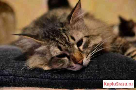 Красавец котик Чебоксары