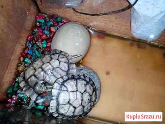 Черепахи с аквариумом Комсомольское