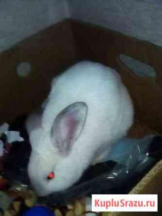 Кролик Ярославль