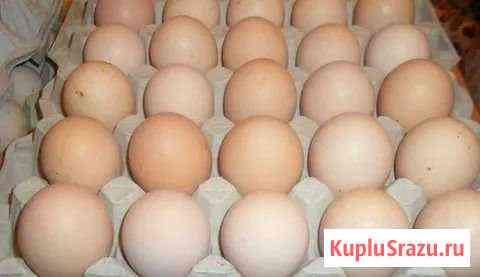 Инкубационное яйцо бройлера цыплята Рузаевка