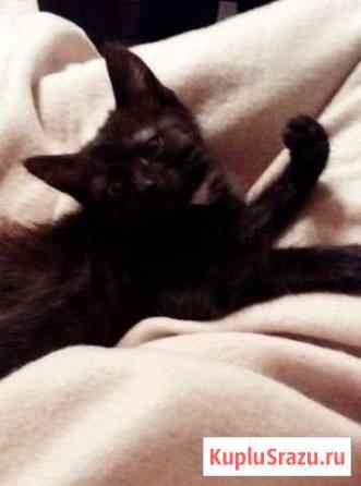 Отдам котенка Вязьма