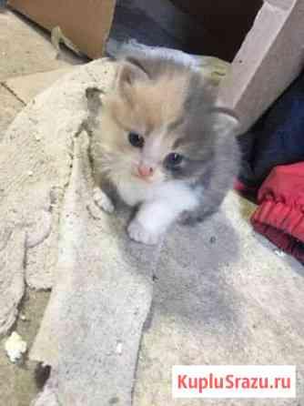 Отдам котят в хорошие руки Липецк