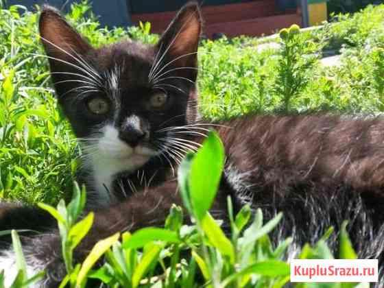 Котята 4 месяца в добрые руки Абакан