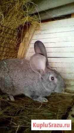 Кролики Карасук