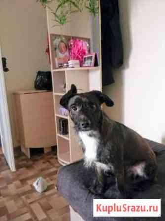 Собака кобель 2 года Томск