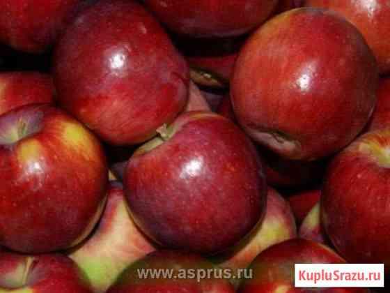 Саженцы плодовых деревьев Саратов