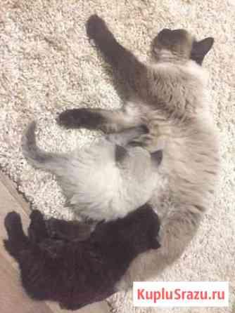 Подарим котят Соликамск