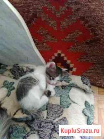 Котята в добрые руки Жирновск