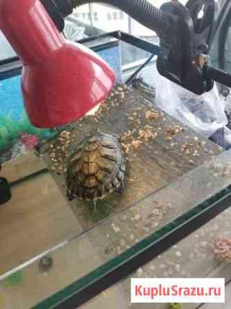 Черепаха Маркова