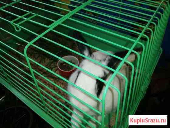 Продаю декоративного кролика Казань