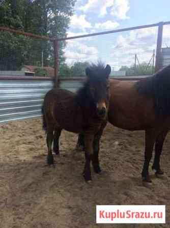 Перевозки и продажа лошадей Пенза
