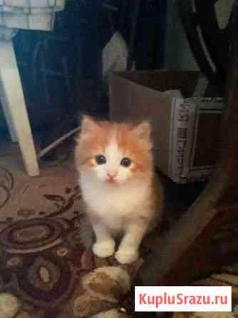 Котёнок Воронеж