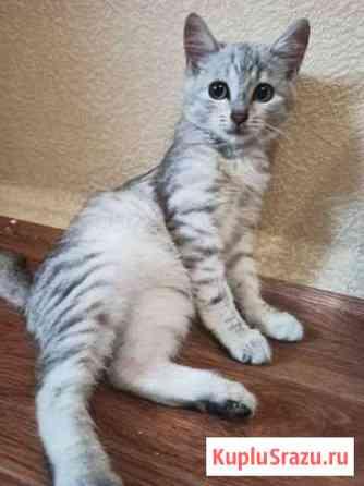 Красивый кот Кузнецк