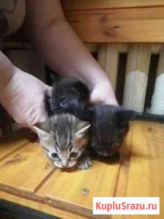 Котята в добрые руки Щекино