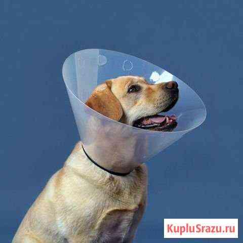 Воротник для крупной собаки Красноярск