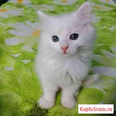 Отдам котят Бузулук