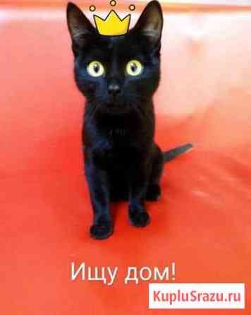 Кошечка в добрые руки Улан-Удэ
