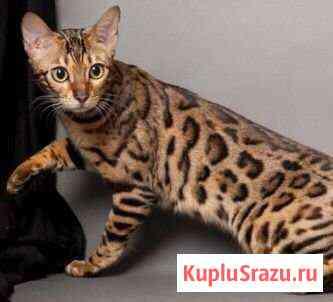 Животные Архангельск