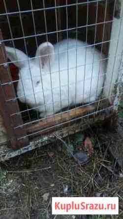 Продам кролика Волгоград