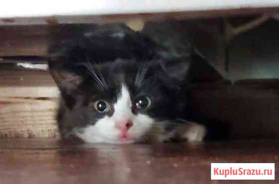 Котята ищут дом Архангельск