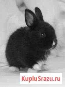 Кролики мясные Новокузнецк