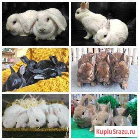 Декоративные кролики разных пород Балаково