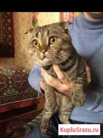 Молодой котик в хорошие руки Липецк