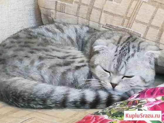 Кот на вязку Челябинск