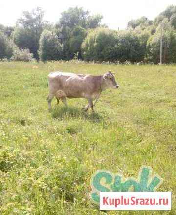 Корова Новомосковск
