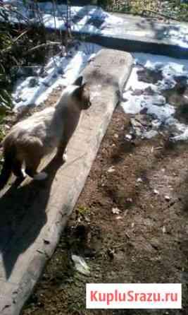 Милый котик Усть-Баргузин