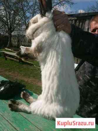 Продам кроликов Рязань