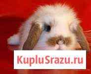 Карликовые кролики разных пород и окрасов Красноярск