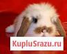 Карликовые кролики разных пород и окрасов