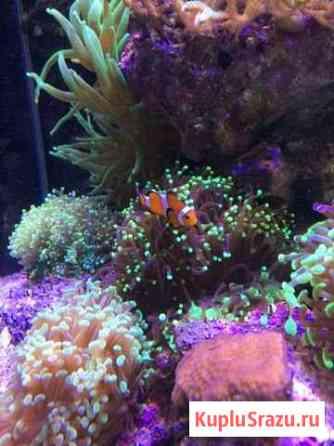 Морские аквариумы Рыбки Кораллы Оборудование Омск