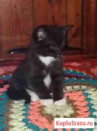 Отдам котят Тальменка